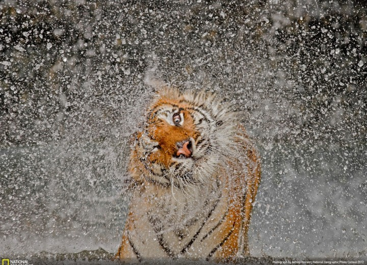 Photo by Ashley Vincent  - Nature, Grand-Prize Winner and Nature Winner